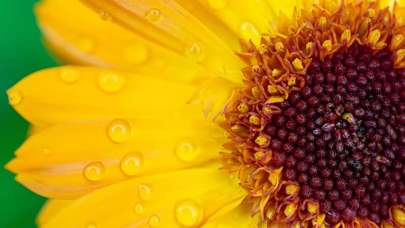Close up of the centre of a sunflower