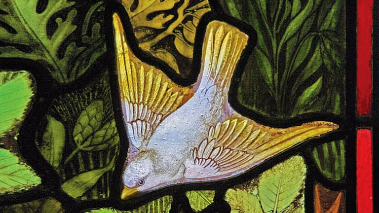 Stained glass window detail of a dove, from Emmanuel,