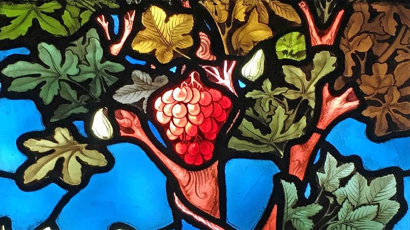 Emmanuel stained glass depicting grapes on a vine